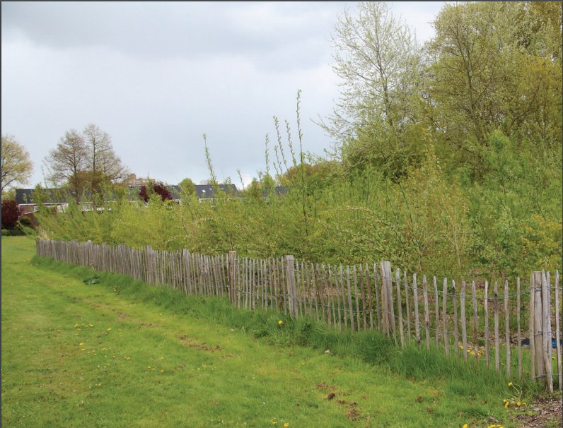 Photo of a fenced-off thicket
